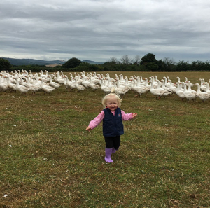 4th generation turkey farmers devon